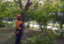 Defesa Civil assume coordenação e execução do serviço de poda de árvores em Rio Grande